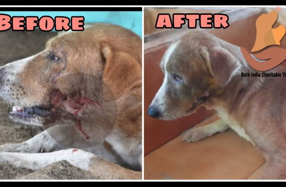 Dog rescue, treatment and release- NGO for animals in Pondicherry