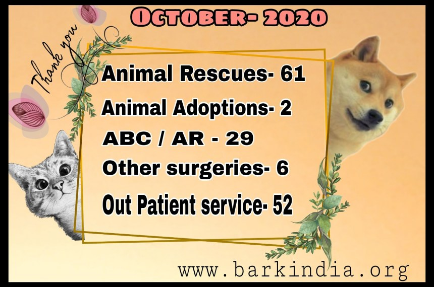 How You Supported Us to Help Animals- Animal Rescue NGO