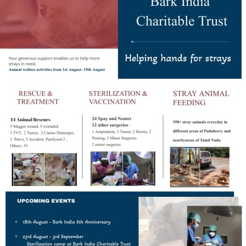 Animal Rescues, Treatments and Feeding