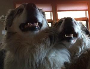 Ash and Tess