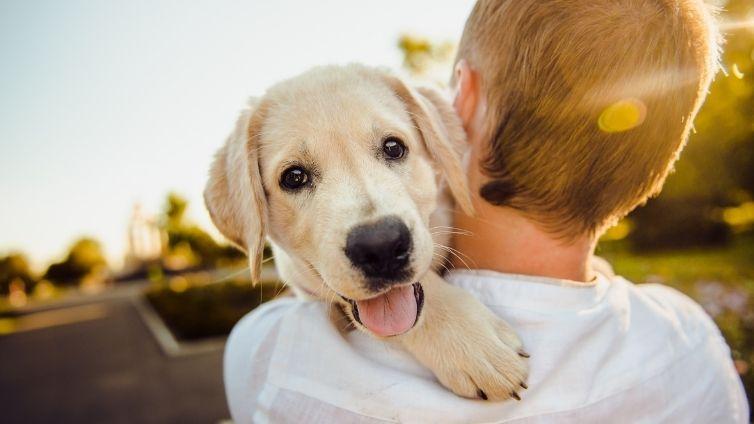 puppy shoulder