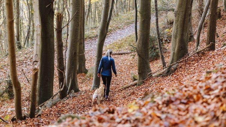 off leash dog walk