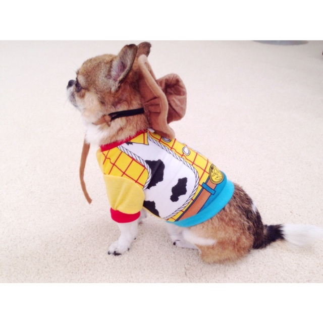22 Unique Dog Costume Ideas for Halloween