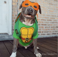 19 Creative Costumes You Can Make For Your Dog This ...