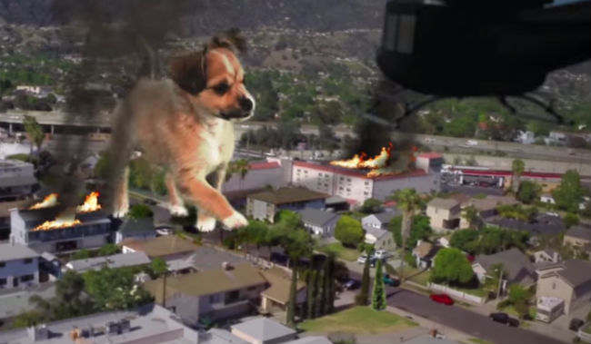 Dogzilla Is Our Pick For Best Movie of 2014 Paws Down  BarkPost