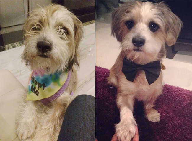 17 Before And After Pics Of Rescued Dogs To Make Your Eyes