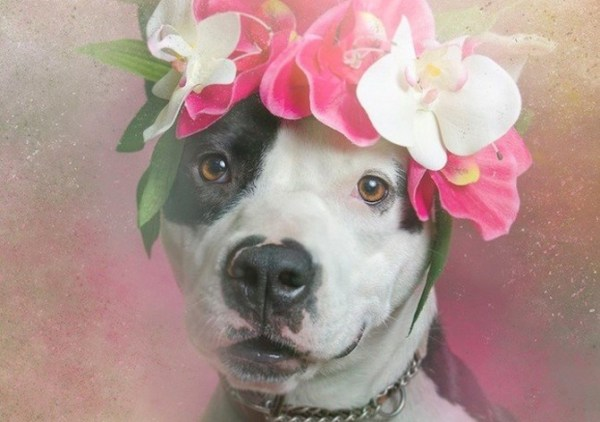 These Dreamy Creations Of Pit Bulls And Flowers Are