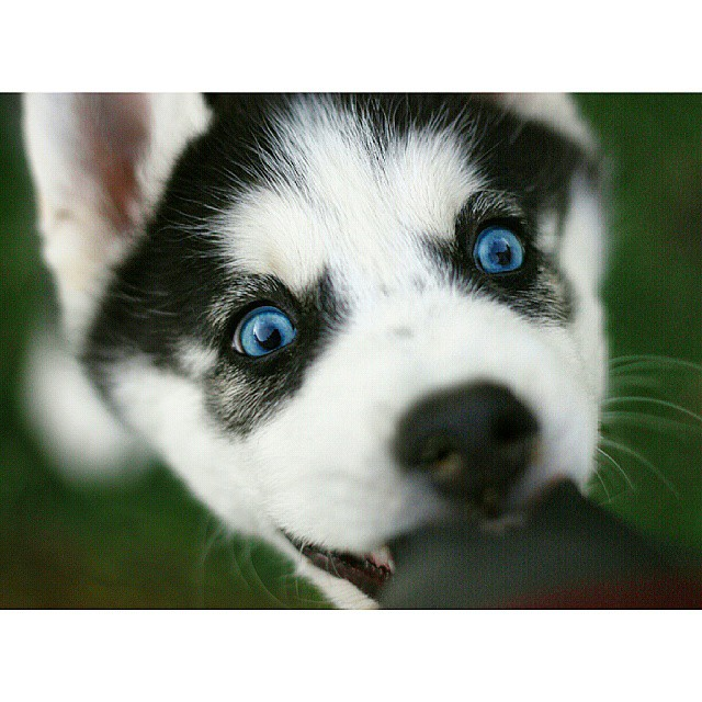 11 things only husky