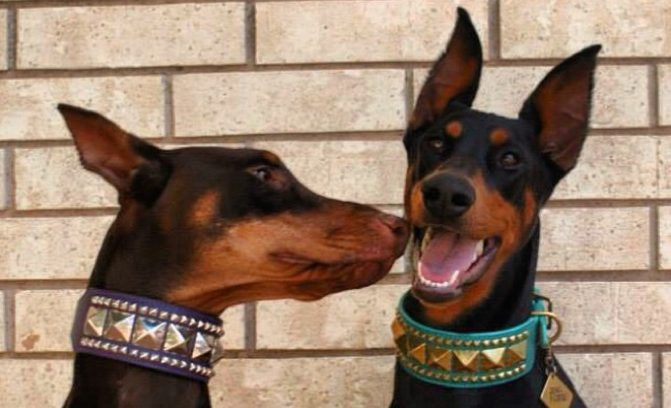 This List of Top 10 Most Tolerant Dog Breeds May Blow Your