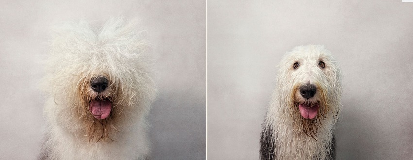 bone_old-english-sheepdog