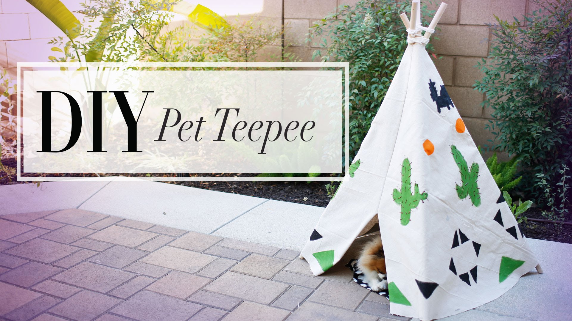 Bring A Little Bit Of Whimsy Into Your Pups Life With