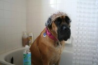 11 Dogs Who Are Ready For Their Royal Bath Treatment ...