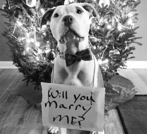 16 Dogs Who Proposed Marriage For Their Humans BarkPost
