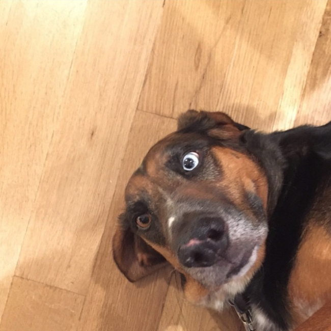 britta-hound-dog-eyes