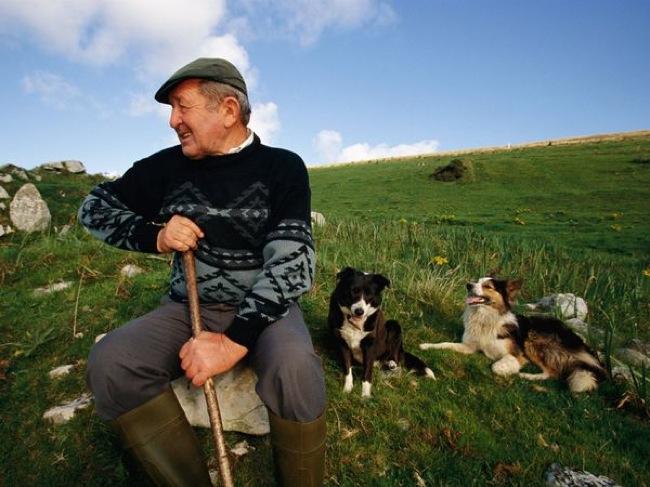 farmer-dog-ireland_6784_600x450