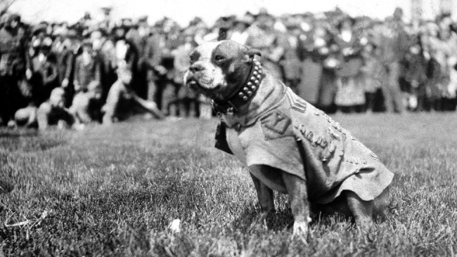 """Military dog """"Stubby"""" in gear with all the troops in the background."""