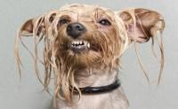 Wet Dog Carpet Smell - Carpet Vidalondon