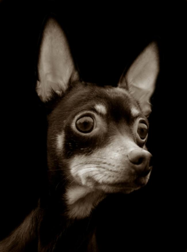 traer-scott-shelter-dogs-4