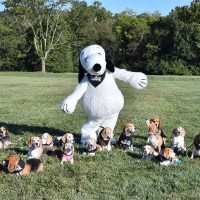 200 Dogs (And A Guy In A Snoopy Costume) Participate In ...