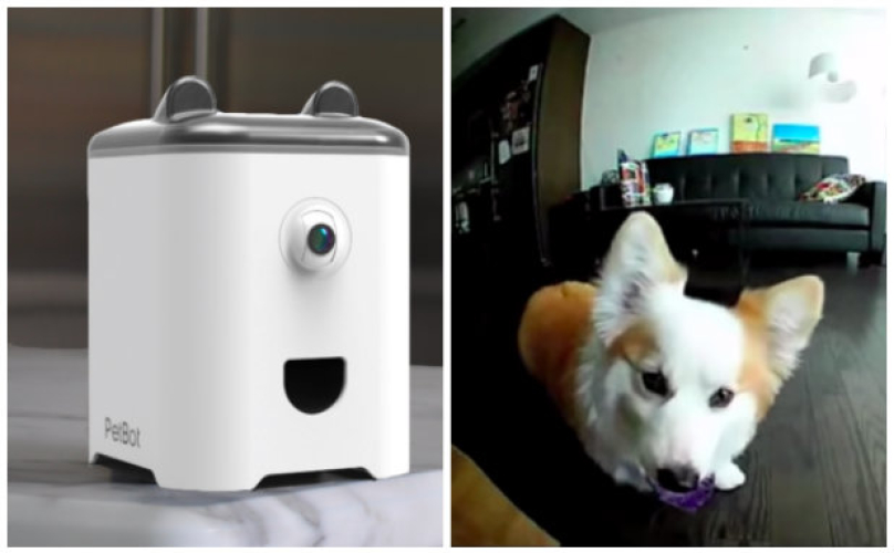 """The First Smartphone For Your Pet"" Sends Your Dog's Selfies Right To You"