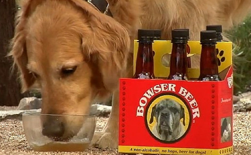 Image result for beer for your dog