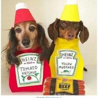 20 Creative Ways To Dress Your Weenie This Halloween ...