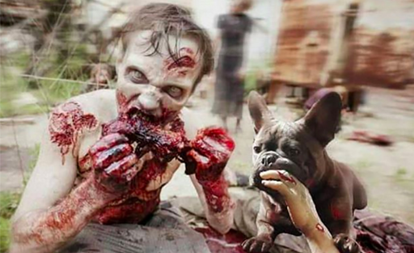 Hd Zombie Girl Wallpaper 8 Signs Your Dog Might Be Turning Into A Zombie Barkpost