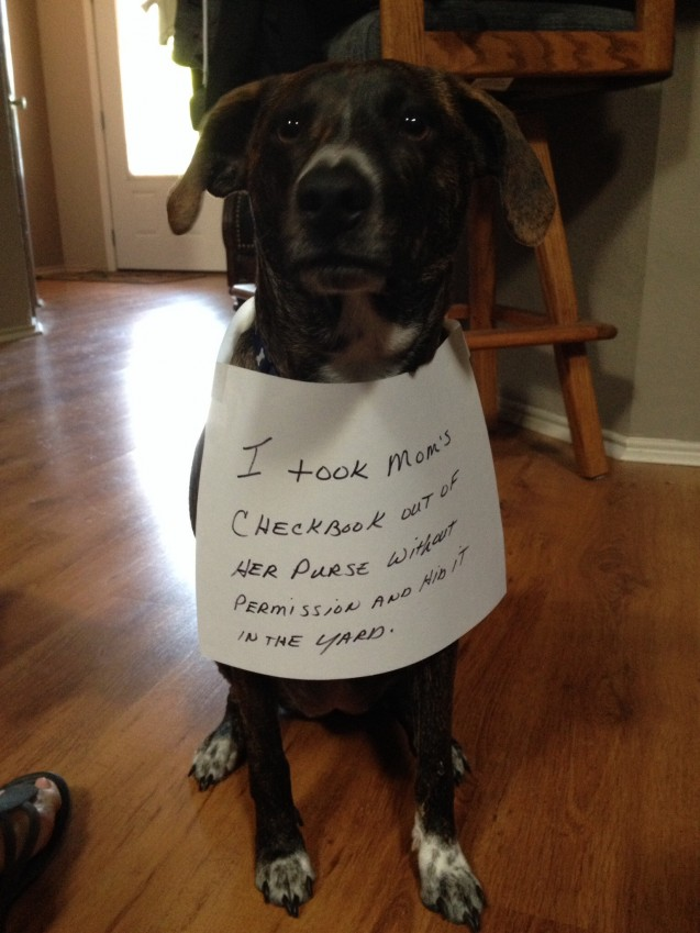 15 Dogs Who Dont Approve Of Your Black Friday Shopping