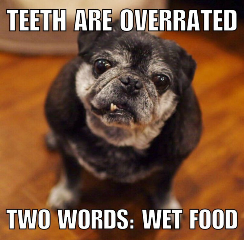 15 Senior Dogs Dropping Words Of Wisdom Like Only The