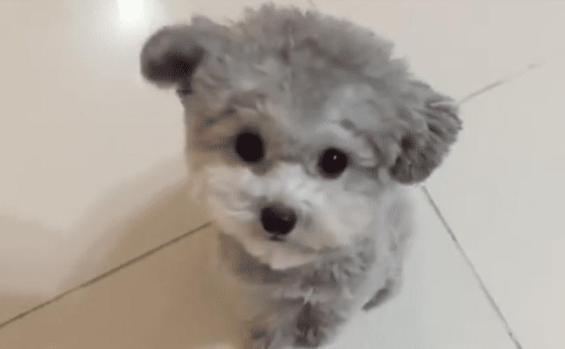 Cutest Pit Bull Dog World