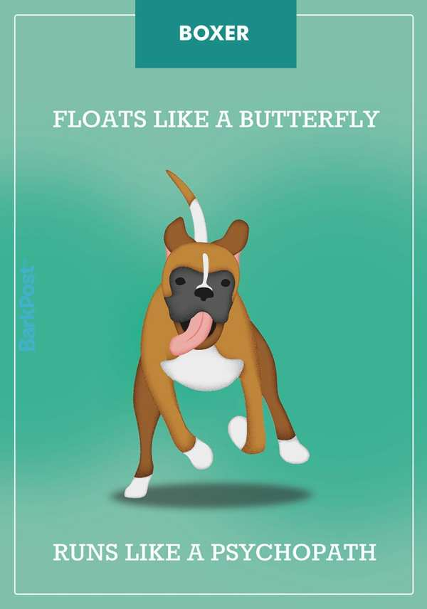20+ Boxer Dog Slogans Pictures and Ideas on Meta Networks