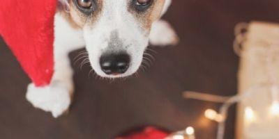 keep the puppy out of the Christmas tree with these easy hacks for pet owners!
