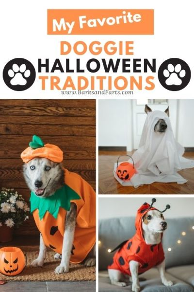 Holiday Traditions for Pet Owners to make Halloween more for fun for dogs!