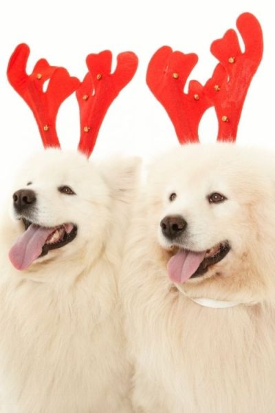 Two dogs showing their excitement at Christmas time.