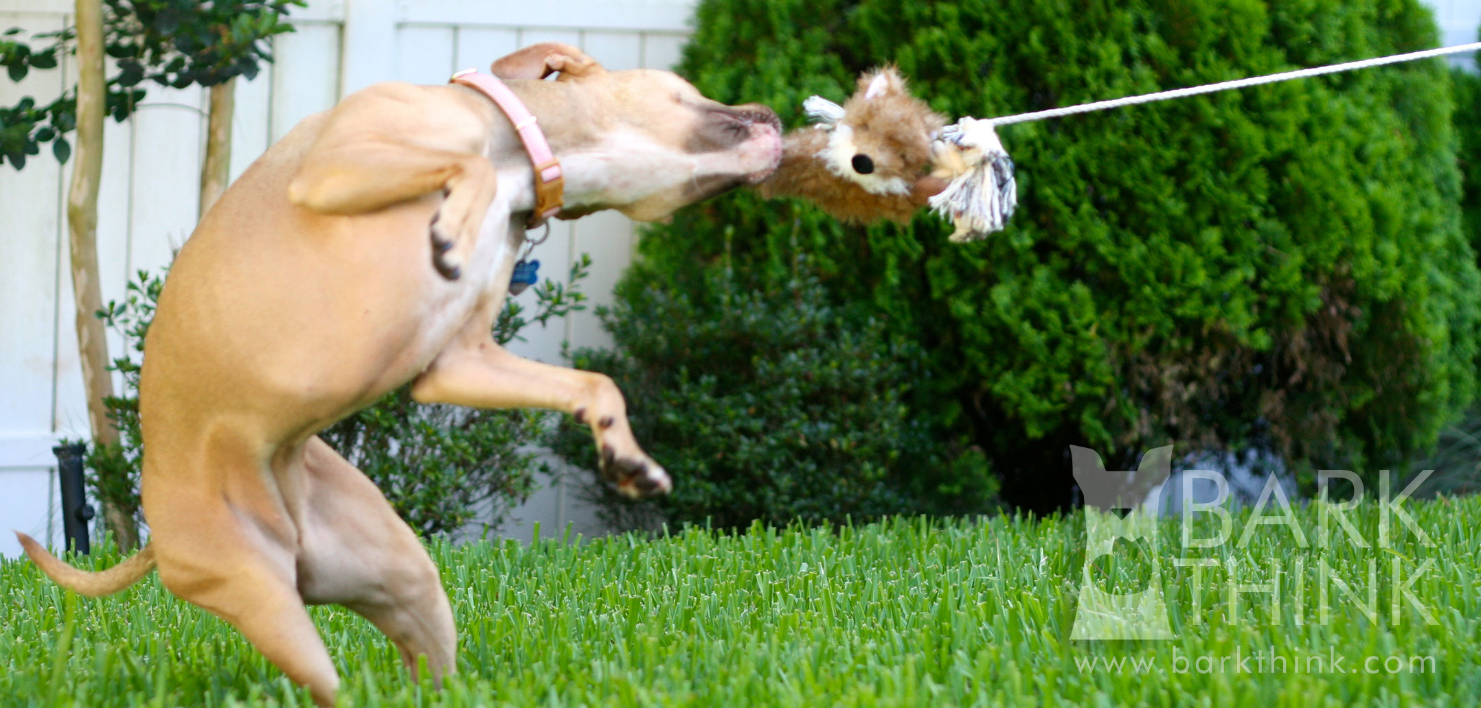 what is a dog flirt pole