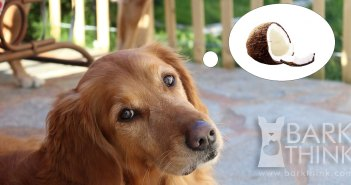 Benefits of Coconut Oil for Dogs: Healthy Skin and Coat, Digestion Benefits, Reduce Bad Breath and Doggy Odor