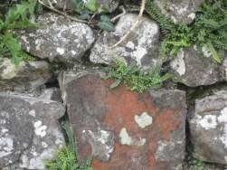 ferns in wall