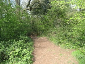 Looking back at Tor Wood