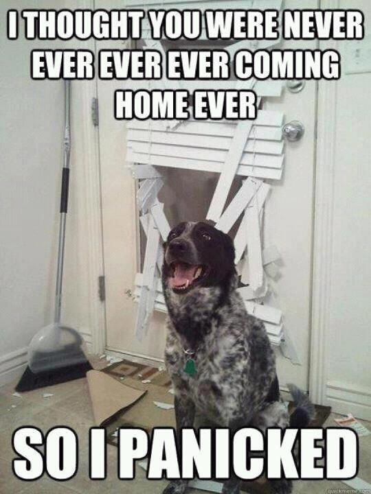 dog destroys home