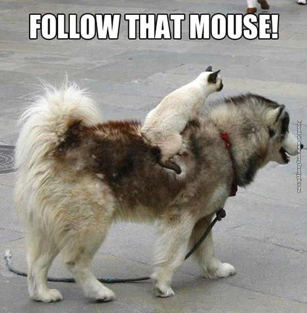 funny-cat-pictures-follow-that-mouse