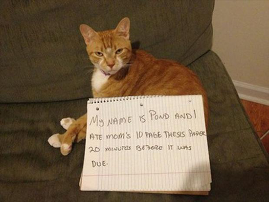 most-hilarious-cat-confessions-1