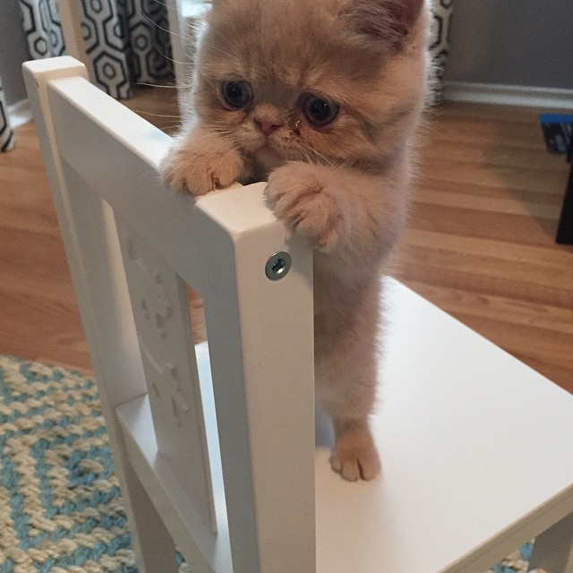 george-the-cat-standing-on-2-legs-15