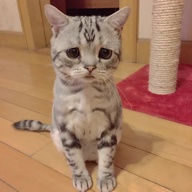 saddest cat on the internet 4