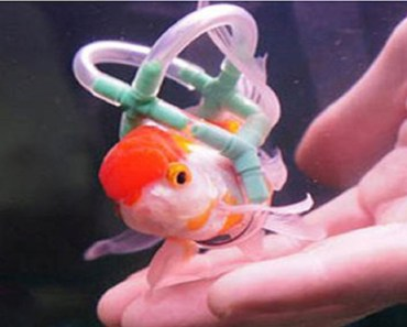 disabled fish