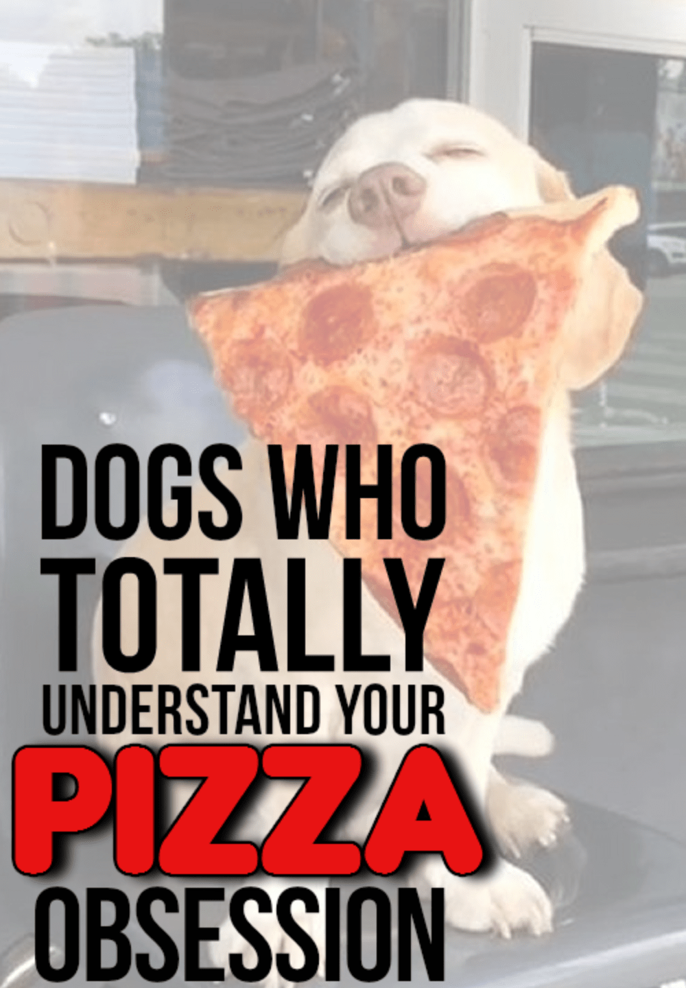 dogs and pizza