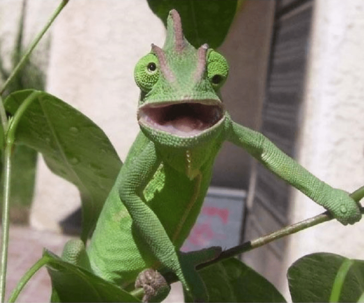 shocked lizard