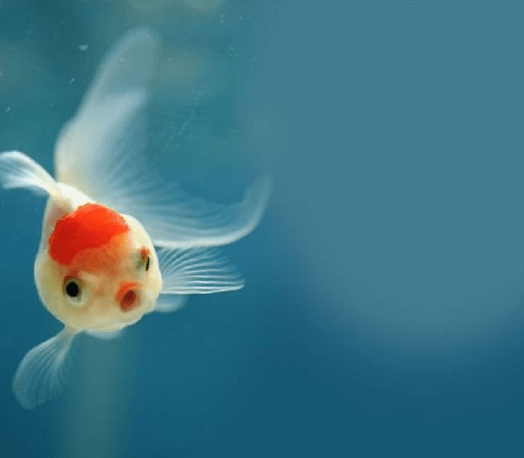 the fish is shocked