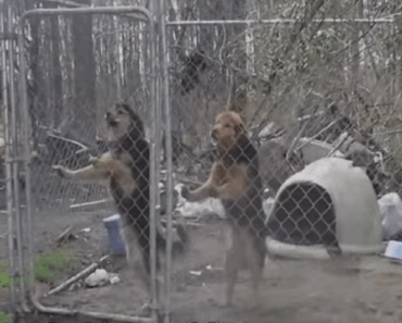 dogs separated then reunited