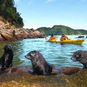Abel Tasman trips Kayaking