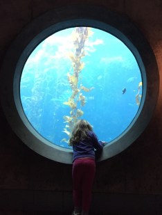 Finding Nemo at Monterey Bay Aquarium.